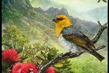 Art | Birds of a Feather / Wall art of an about birds by Imagekind artists.