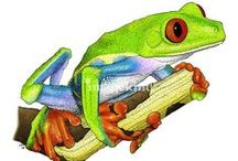 Art | Frogs / Wall art featuring frogs by Imagekind artists.