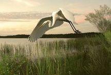 Art | Swamp Scenes / Wall art featuring wetlands by artists on Imagekind.