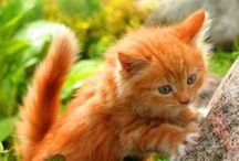 I love red cats