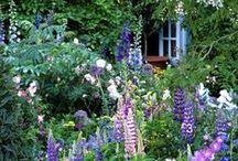 tuin Dorien / Moodbord vooreigen huis en tuin