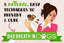 Dog Bad Breath / Prevention and Natural Cures for Dog Bad Breath including Dog Breath Fresheners, Dental Spray, and Other Dog Breath Tips.