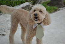 A very well behaved 'best man' - Marley