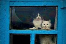 Pets in Windows / Because we're a little obsessed with our pets. But, then again, who isn't?