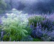 Purples, blues and white garden / Garden inspiration.