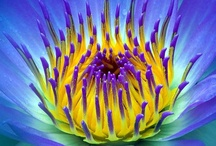 FloresFleursFlowers ✿‿✿ ✿⊱╮ / by Marlene Holland ✿‿✿ ✿⊱╮