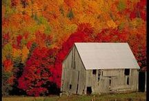 Autumn / My favourite part of the year.  ~Quiet~Sleepy~Melancholic~Colourful~