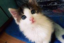 Kofi / my cat :3