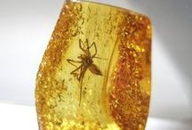 FOSSIL & STONES / fosiles y rocas, minerales