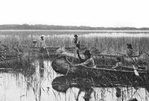 """History of Wild Rice / Interesting facts about the use and history of wild rice, (in Ojibwe, """"manoomin"""") and the peoples who have cultivated it through time."""