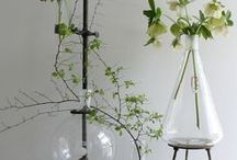 PLANTS / all kinds of plant inspiration and well as how to look after plants