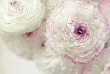 ~RANUNCULUS~ / Beautiful Ranunculus