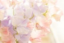 ~Flowers in PASTELS~ / Beautiful flowers in pastels