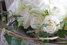 ~ROSES~ / Beautiful Roses
