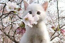 ~Cute Moments~ / Cute moments - sweet animals.