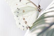 Farfalle - Butterflies - Mariposas