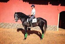 Yeguada Las Agrupadas / Las mejores instalaciones para el mundo del caballo en Yeguada Finca las Agrupadas.