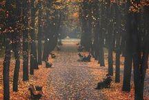 Autumn it's all i need ...