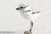 Squee / animals, baby animals, cute