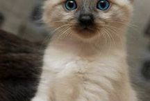 I want it....Really want it(not like the baby polar bear)