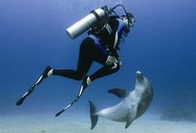 Scuba Diving / There's two kinds of people I want to talk to: Those from PADI and those from DAN ;)