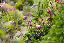 Gardens / Ideas and inspiration for flower and vegetable gardens