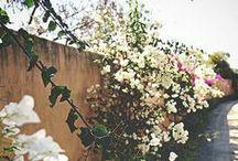 flora / by Annie Hansler