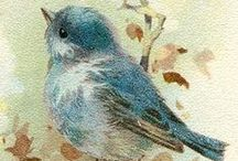 Bluebird Images
