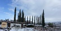 Snow Day at Leoness Cellars / One magical, Winter day it snowed in Temecula, CA. This is the amazing view our vineyards at Leoness Cellars turned into.