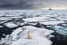 Arctic Inspiration / by Hila Reubens