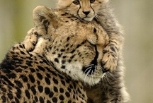 Endangered Animals / by Darlene Kulczycki