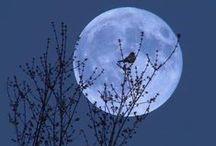 Noite - Luas