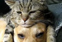 Gatos - Cats