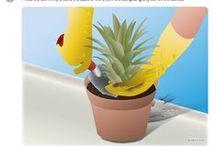 Tips for Vegetable Garden - Dicas para Horta ou Jardim