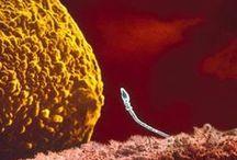 CELL BIOLOGY - BIOLOGIA CELULAR