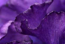Purple Paradise / by Terrie Bee