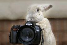 Funny bunny...