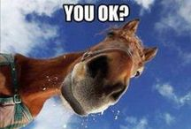 Horses...Konie...Cavalli...