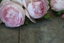 Kukat / Kukkien kauneutta