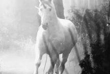 Meine Pferde / Alles über Pferde