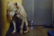 STOP Animal Gruelty!!!