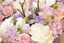 Fiori e ancora fiori