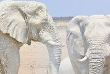 ELEPHANT /