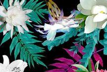 PATTERN / pattern /// geometrical things /// flowers /// tropical patterns /// seamless pattern