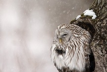 Owls / I can't resist pictures of owls. With their mystical and wise attitude they're an important source of inspiration.