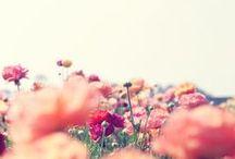 Dame Nature c'est la plusss belle.