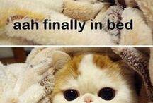 kedili fotoğraflar