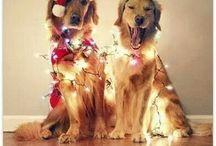 Christmas ☆☆☆☆!!!!
