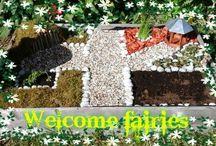 Fairy/miniature Garden, Terrarium