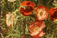 ARTS | floral
